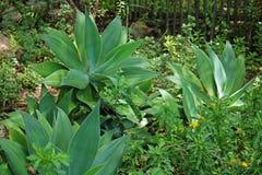 BER agawa I zieleni roślinność W ogródzie Zdjęcie Stock