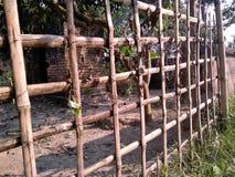 Bera de bambú foto de archivo libre de regalías