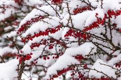 Berbéris Snowcovered dans le village tchèque images stock