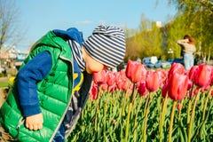 Berbeć chłopiec wącha tulipanu w ogródzie przy wiosna dniem Obrazy Royalty Free