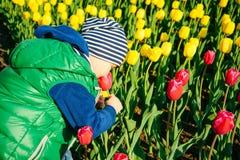 Berbeć chłopiec wącha tulipanu w ogródzie przy wiosna dniem Zdjęcie Stock