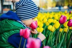 Berbeć chłopiec wącha tulipanu w ogródzie przy wiosna dniem Fotografia Stock