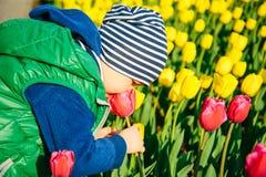 Berbeć chłopiec wącha tulipanu w ogródzie przy wiosna dniem Obraz Royalty Free