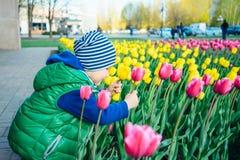 Berbeć chłopiec wącha tulipanu w ogródzie przy wiosna dniem zdjęcie royalty free