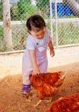 Berbeć migdali kurczaka przy gospodarstwem rolnym w Tajlandia fotografia royalty free