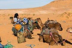 Berber bereidt een caravan op de manier voor Royalty-vrije Stock Foto's