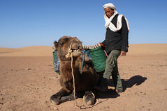 Berber and camel Stock Images