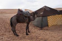 Berber camp Stock Image