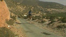 Berber die een kameel bevrijden marokko stock video