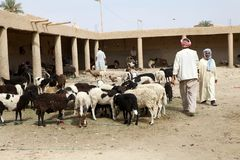 Berber goats market Stock Image