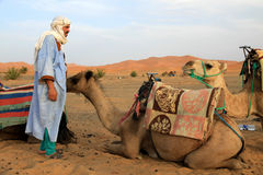 Berber guide and his camels Royalty Free Stock Photo