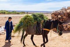 Berber kobiety odprowadzenie za ładownym mułem Zdjęcia Royalty Free