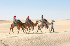 Berber leading tourists on camels Stock Images