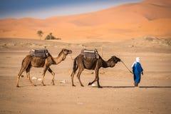 Berber mężczyzna wiodąca karawana, Hassilabied, sahara, Maroko Obrazy Royalty Free