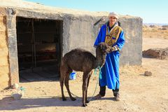 Berber man with baby camel calf in the Sahara Desert, Morocco, A Royalty Free Stock Images