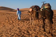 Berber man leading caravan, Hassilabied, Sahara Desert, Morocco. Berber man leading camel caravan, Hassilabied, Sahara Desert, Morocco Stock Image