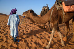 Berber man leading caravan, Hassilabied, Sahara Desert, Morocco. Berber man leading camel caravan, Hassilabied, Sahara Desert, Morocco Stock Photo