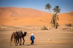 Berber man leading caravan, Hassilabied, Sahara Desert, Morocco Stock Images