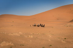 Berber man leads caravan through Sahara Desert, Morocco. Hassilabied, Morocco - January 19th, 2016: Berber man leads camel caravan close to Hassilabied Stock Photo