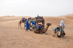 Berber men with camels Royalty Free Stock Photo