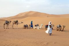 Berber men with camels Stock Photography