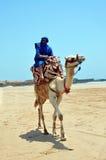 Berber på kamel royaltyfria bilder