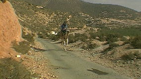 Berber que libra un camello marruecos almacen de video