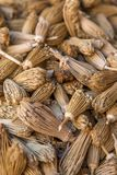 Berber toothpicks Royalty Free Stock Image
