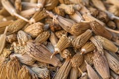Berber toothpicks Royalty Free Stock Images