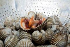 Berberechos frescos de la sangre de los crustáceos Fotografía de archivo libre de regalías