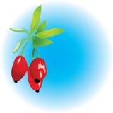Berberis stock illustratie