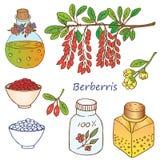 Berberis Arkivfoton