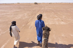 Berbers holding a camel in the Sahara desert Royalty Free Stock Image