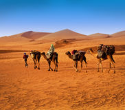 Berbesky tribe passes the desert Royalty Free Stock Photography