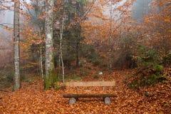 Berchtesgadener ziemia, jesień las, ławka Fotografia Stock