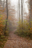 Berchtesgadener ziemia, jesień las, mgła Fotografia Royalty Free