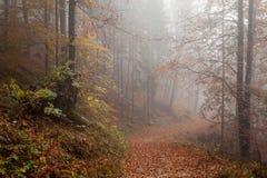 Berchtesgadener ziemia, jesień las, mgła Obrazy Stock