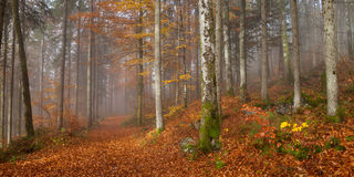 Berchtesgadener ziemia, jesień las, mgła Zdjęcia Stock