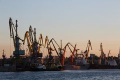 BERDYANSK - UKRAINE, LE 2 SEPTEMBRE 2016 : Silhouette de beaucoup la grande de grues dans le port à la lumière d'or du lever de s Images libres de droits