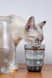 Bere sveglio del gattino Fotografia Stock