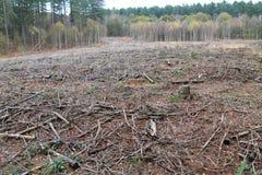 Bereich der Abholzung Stockfotos