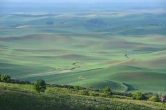 Bereich des grünen Hügels Stockfotos