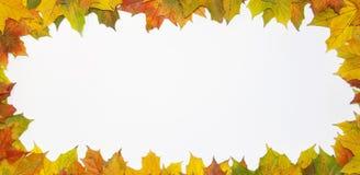 Bereich von den Blättern Stockfotos