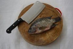 Bereid kokende tilapia van Nijl voor Royalty-vrije Stock Foto