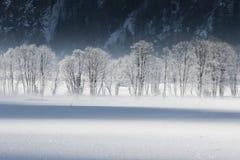 Bereifte Bäume Stockbilder