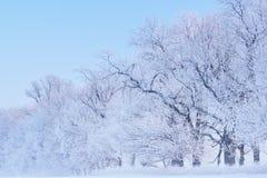 Bereifte Bäume Stockfotografie