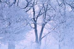 Bereifte Bäume Lizenzfreies Stockbild
