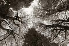 Bereifte Bäume Stockfoto