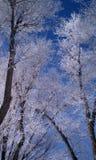 Bereifte Bäume Stockfotos