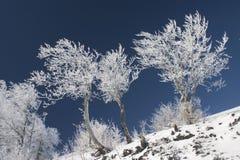 Bereifte Bäume Lizenzfreies Stockfoto